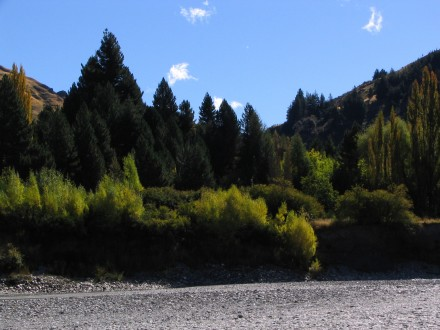 Closeup of the trees beside the Shotover river