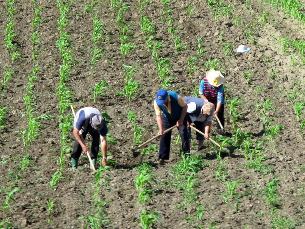 Romanian farmers in rural Transylvania