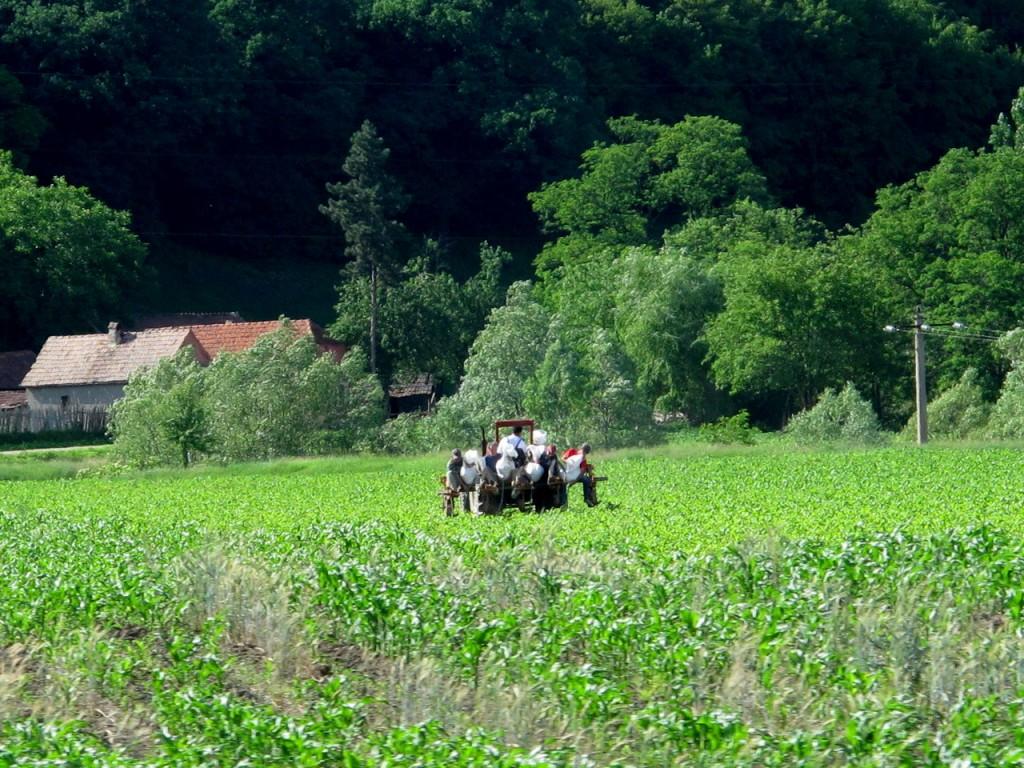 Romanian manual farming
