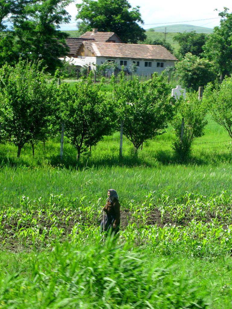 Romanian farmer in rural Transylvania