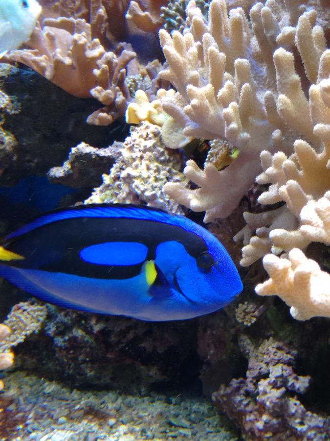 blue-fish-1