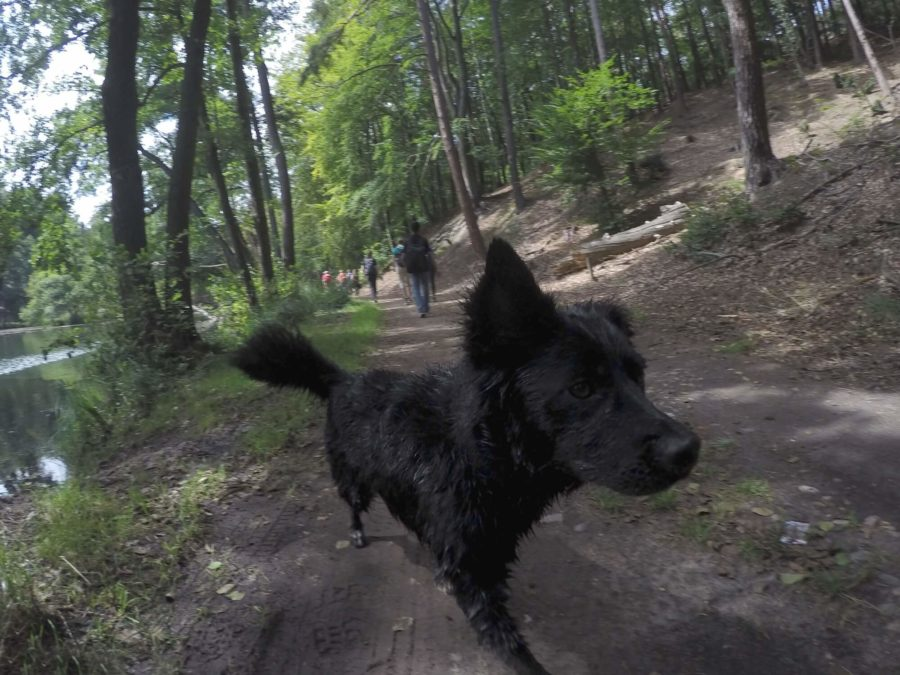 Delphi the dog